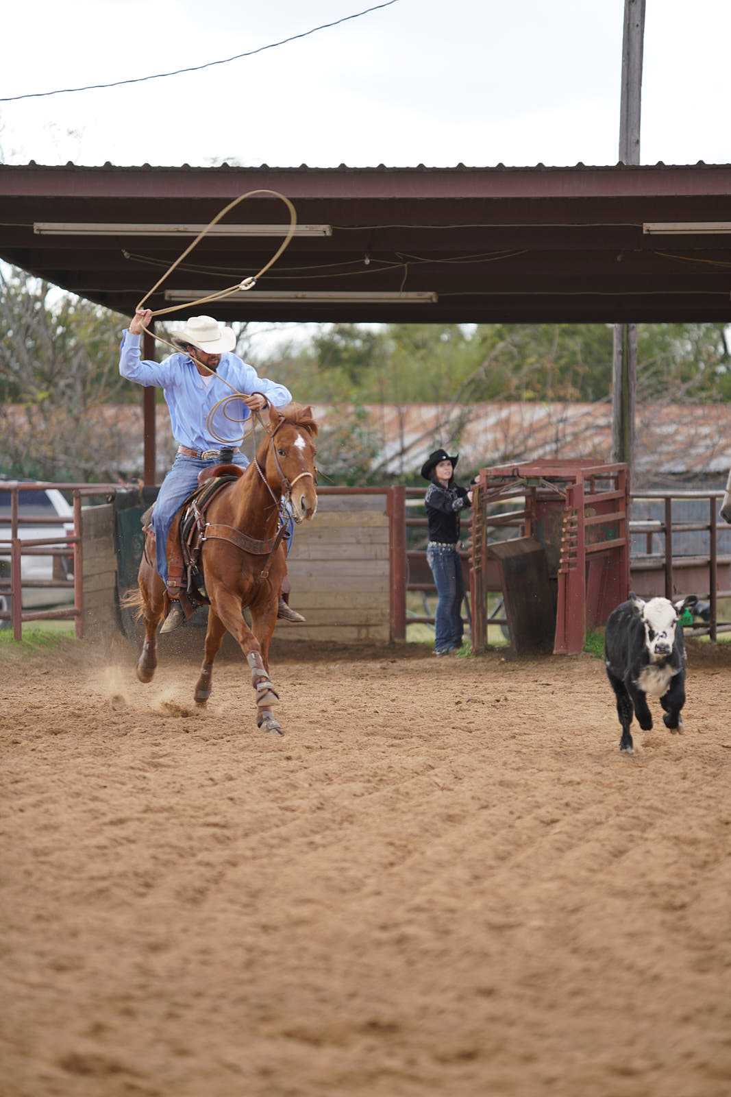 Sony a99 II review - steer roping 2